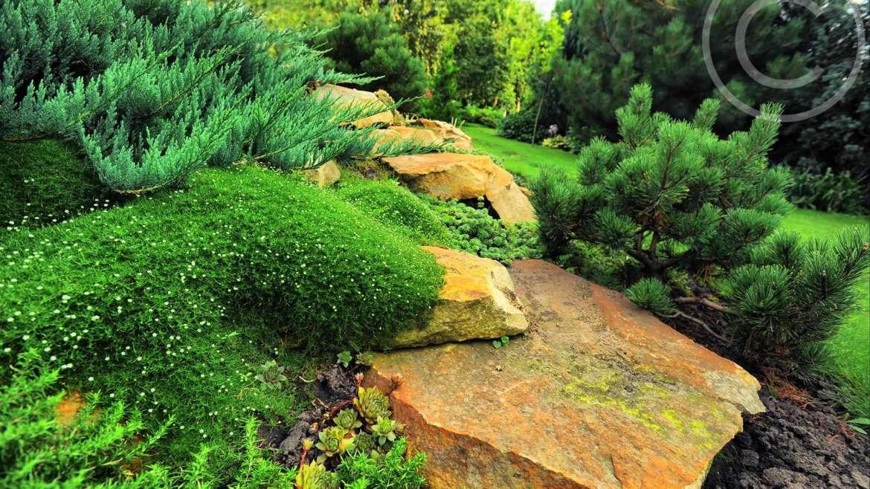 Planting a DIY Vertical Garden