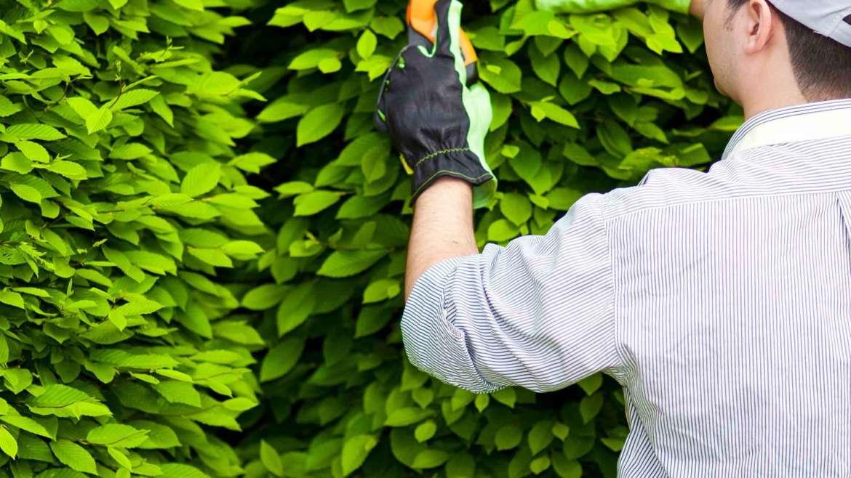 Gardening Lessons